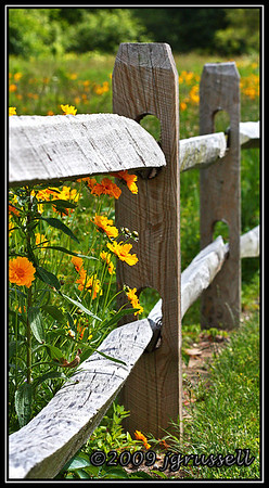 Wildflowers and fence